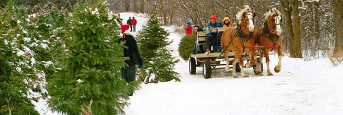 CTFO Christmas Tree Farmers of Ontario, Consumer Information - Guide ...