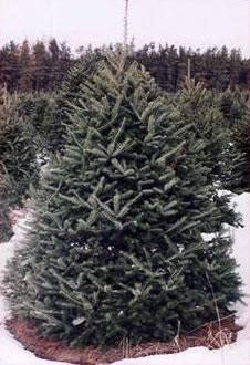 Christmas Tree Farming Facts