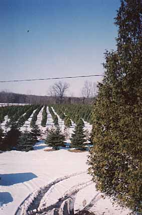 Pinedale Farms Will Help Bring The Christmas Season To